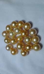 High Quality Loose South Sea Pearl (BZG-2020)